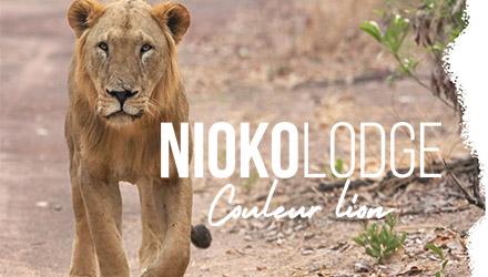 Nioko Lodge projet web réalisé par Fidelo